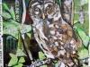 17-july-owl