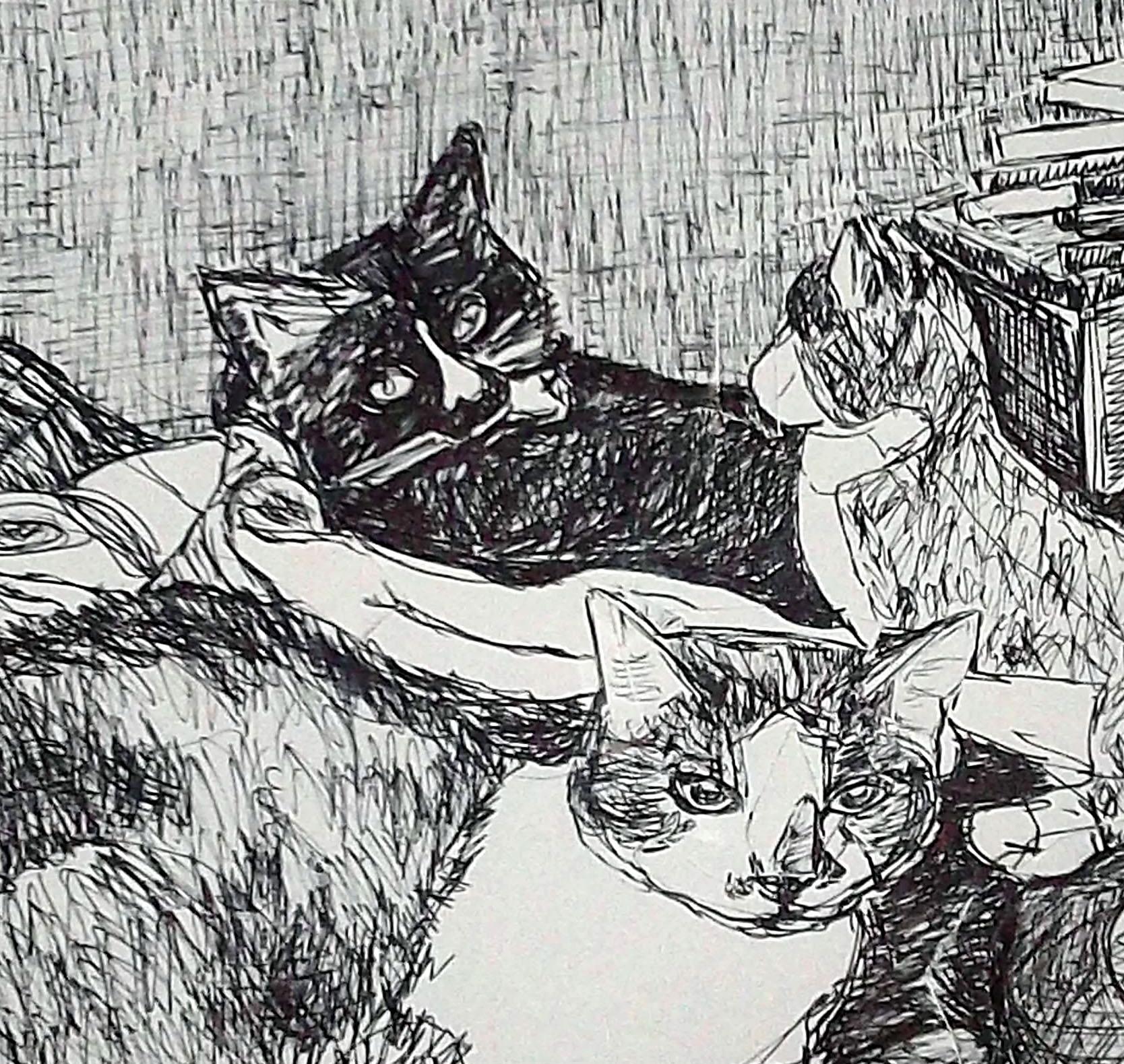 21 FEB  close upThree cats on a bed.jpg