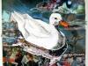 10-apr-white-duck-collage