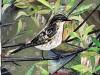 little bird, collage