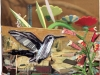 Fantasy Hummingbird, collage