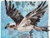 Osprey, collage