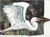 White Crane, collage